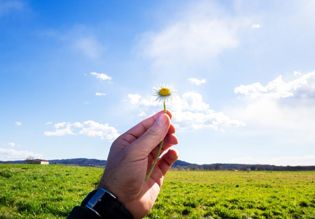 hand holding a daisy against the blue sky